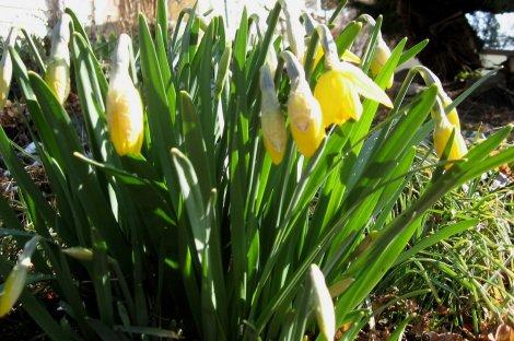 Aries, Uranus, Mars and Spring Zing