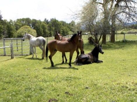 Honoring the Sagittarius love of horses . . .