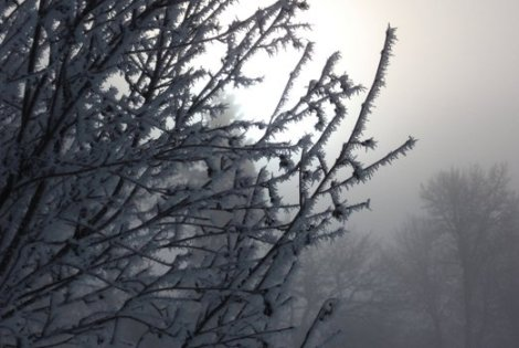 The fragile beauty of hoarfrost.