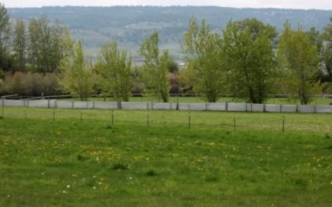 Spring greens intensify