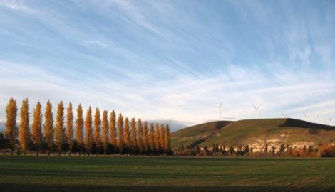 Golden populars & greening hills