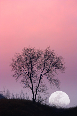 dreamstime_14588954