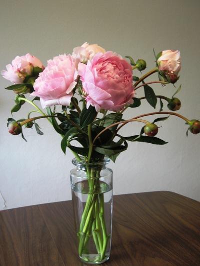 Peonies are blooming