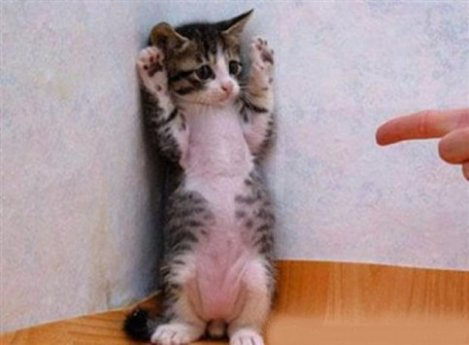 kitty messenger