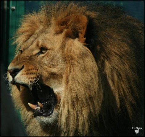 Mercury in Leo roars!