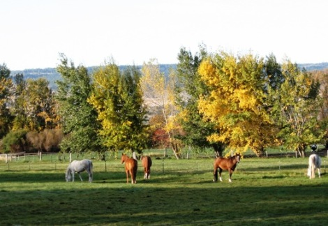 golden popular leaves