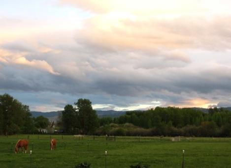 spring evening 525