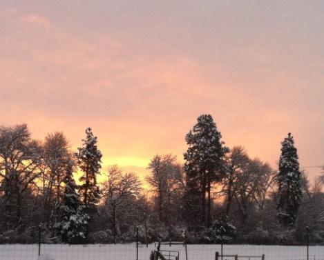 winter dawn 500